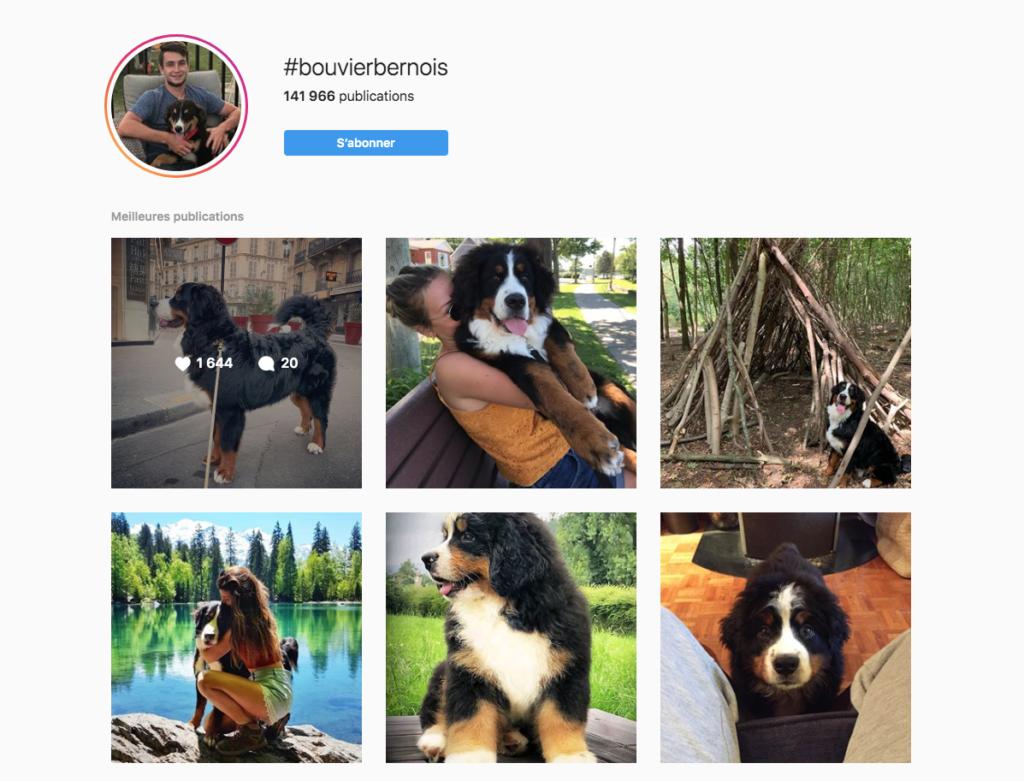 augmenter trafic avec instagram